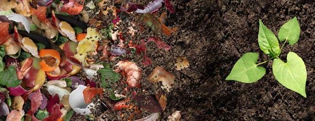 food to soil